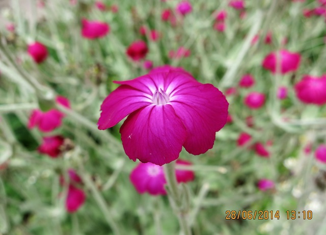 Pflanzen_ 15_2014-06-28_3305