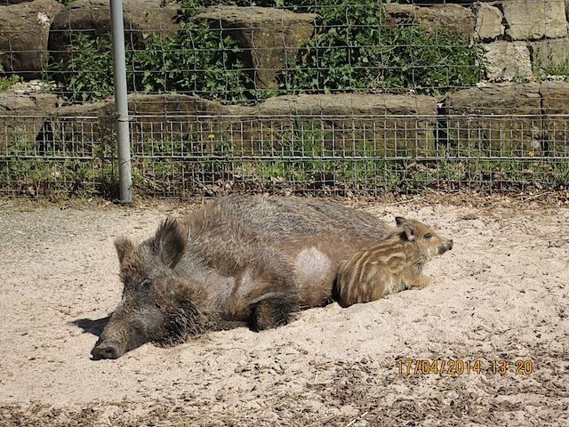Tiere_ 6_2014-04-17_3288