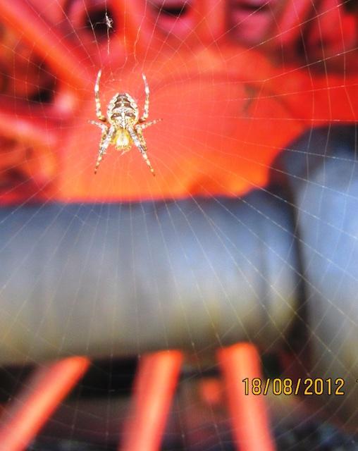Nettes..._ 77_2012-08-18_4538